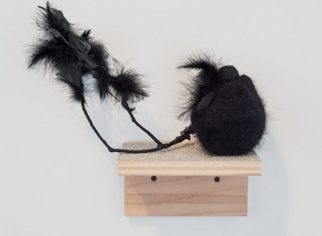 meehan_blackbird-shelf-1